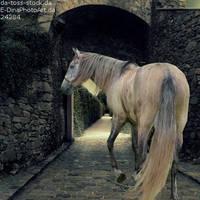 Horse Avatar ~ Classical Chaos