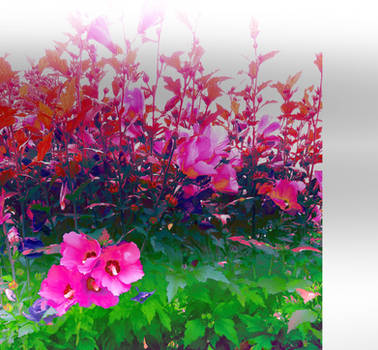 Untitled by InspirationsLadyJana