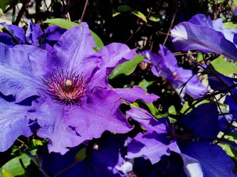 FLOWER  JULO