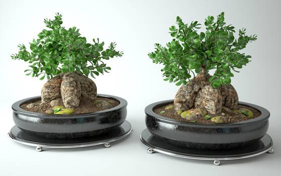 Model 3d : Bonsai tree