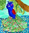 Cute Peacock by Sulfura