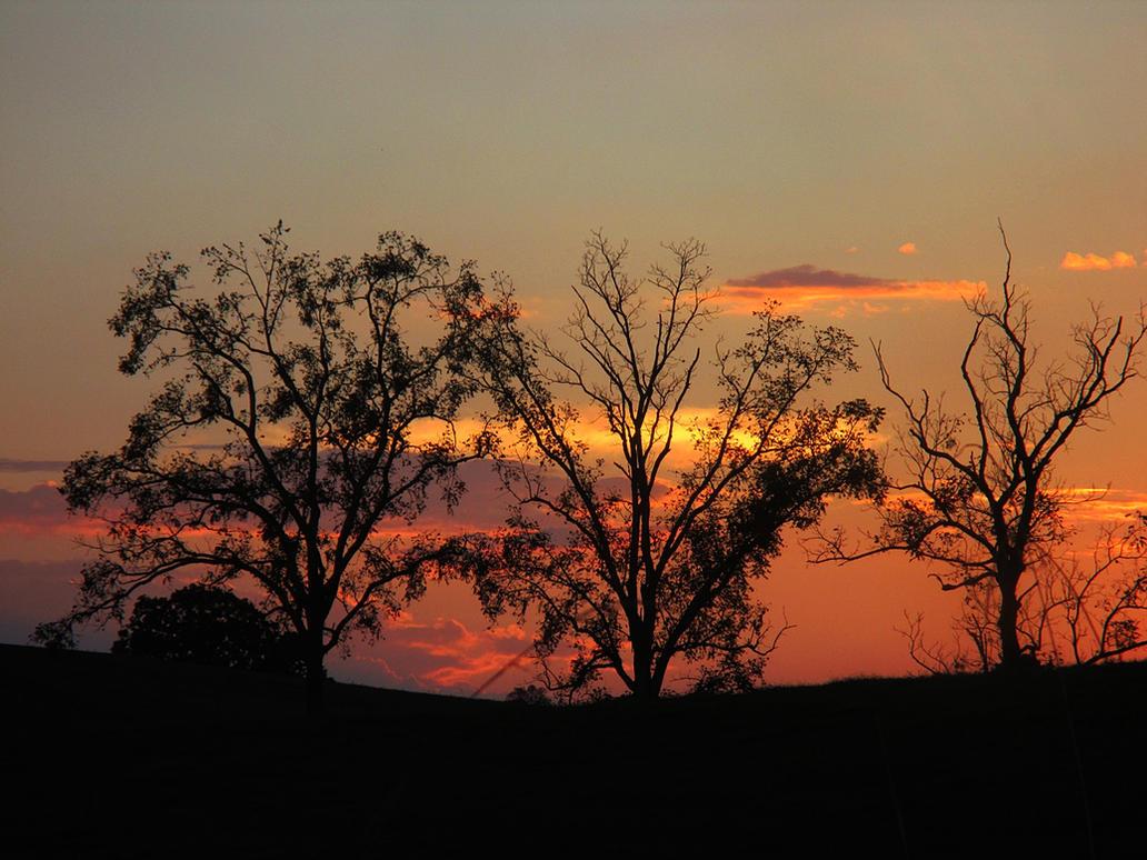 sunset through the trees by sunbeamfireking