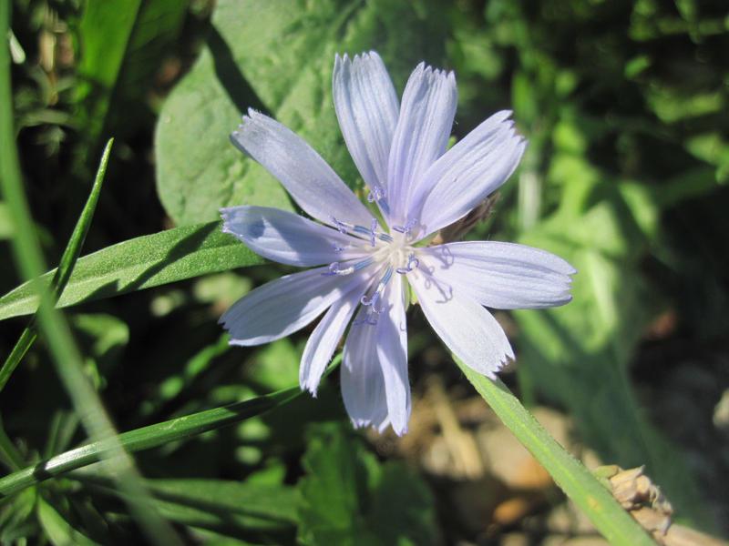 Blue flower by anubis-love