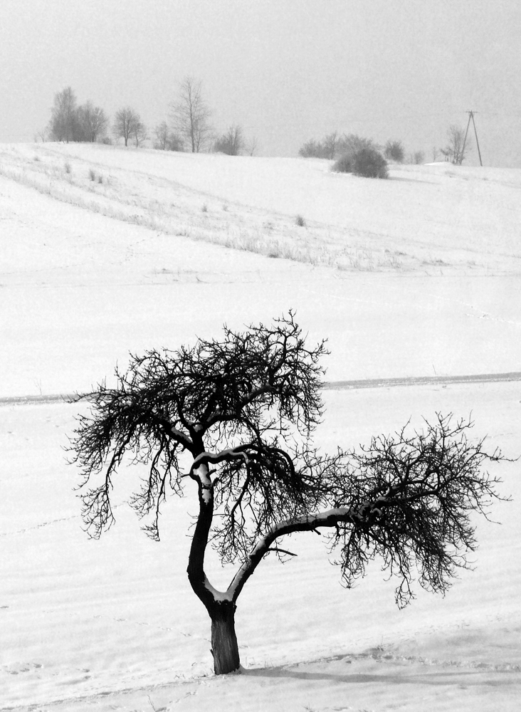 Alone Tree by Krzyho