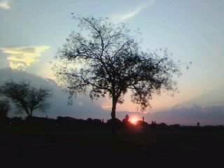 Tree in the Sunset (photography) by 888Jess888