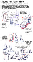 Building the Human Foot