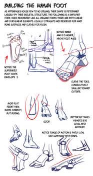 Building the Human Foot by NemoNova