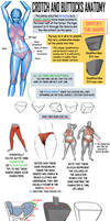 Crotch and Buttocks Anatomy by NemoNova
