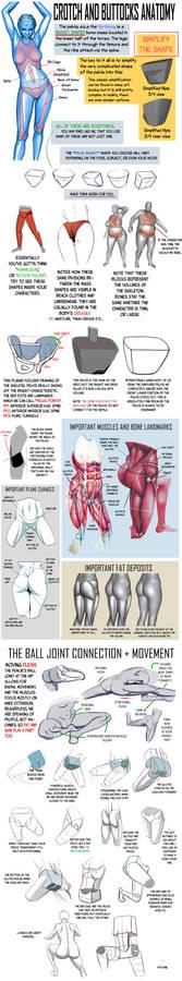 Crotch and Buttocks Anatomy