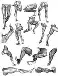 Leg Ecorche and Volume Studies