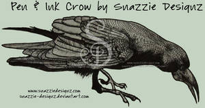Crow - Pen and Ink