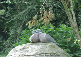 Love Birds by snazzie-designz