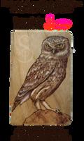 Owl Pyrograph (Wood Burning) Pocket Notebook