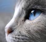 Blue by colors4mind