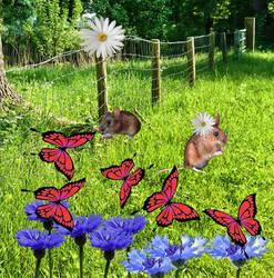 Souriceaux bleuets papillons marguerites