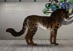 Shedu cat male 139