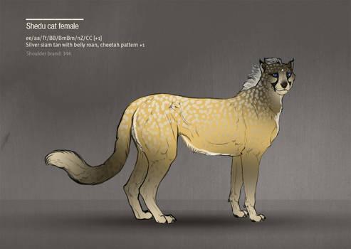Shedu cat female 344
