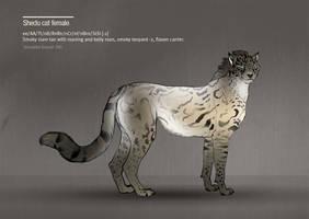 Shedu cat female 345 by Templado