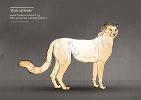 BVS-Isle shedu cat female 422 by Templado
