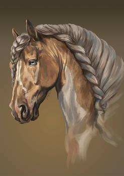 Aimut horse