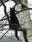 Black Cat Spooky Tree