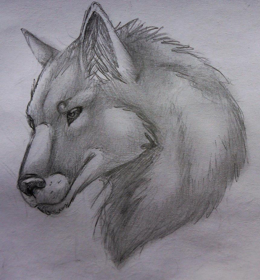 Wolf head by LonlyAntelope