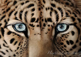 Kim Lee Closeup by Heatherzart