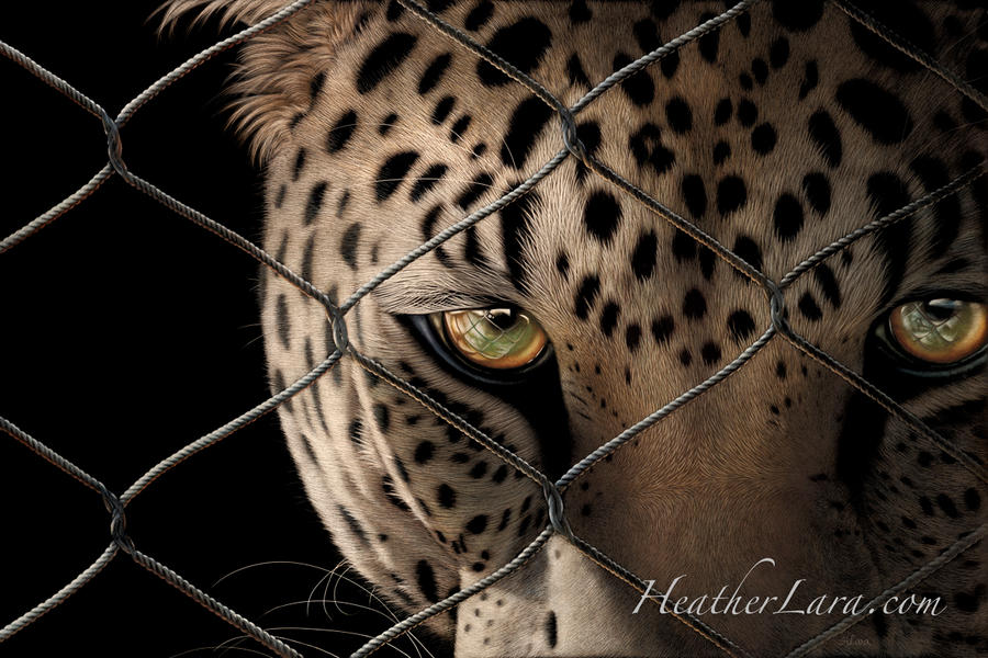 Captivity 2 - Java by Heatherzart
