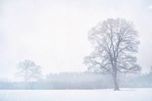 Snowfall by Matt-Campbell