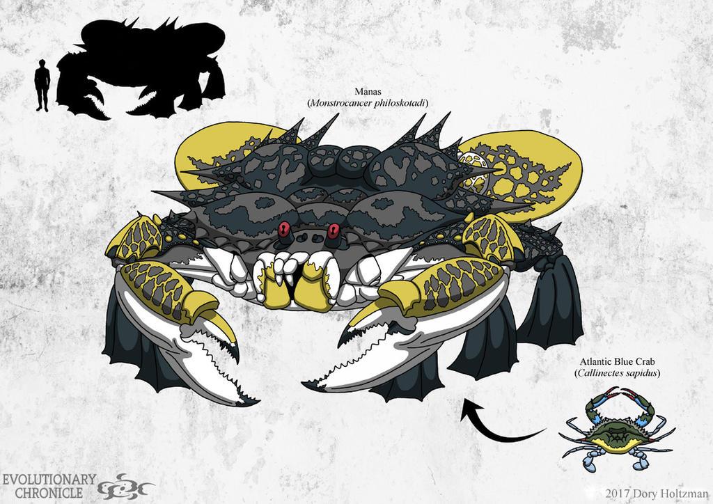 EC - Manas (yellow morph) by Poharex