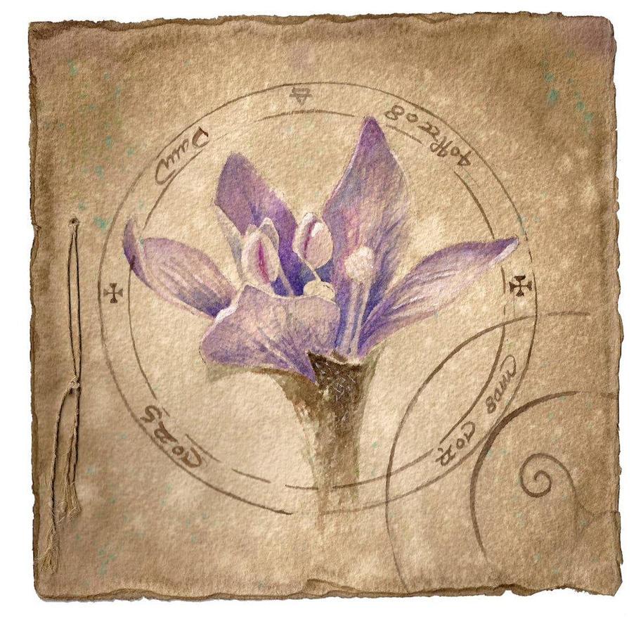 Mandrake Flower   flowerings for shoulder pieces   Pinterest   Flower