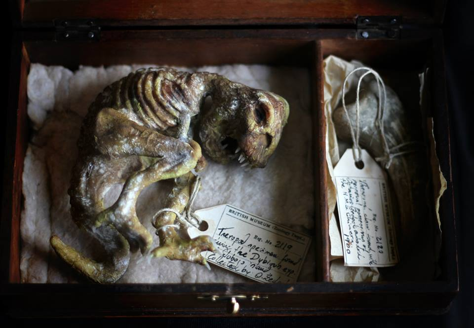 Dubious expedition. Mummified theropod box. OOAK by dodoalbino