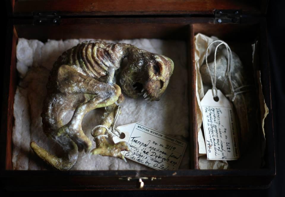 Dubious expedition. Mummified theropod box. OOAK by dodoalbino