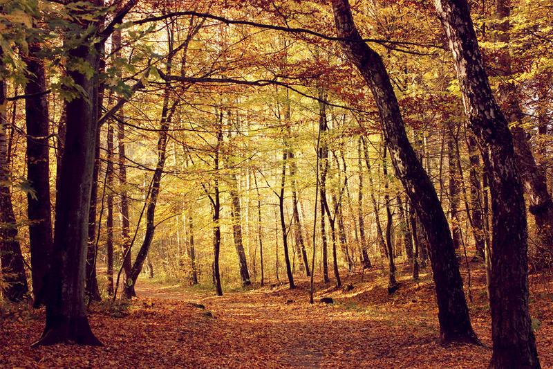 Autumn rush by SisterOfNight87
