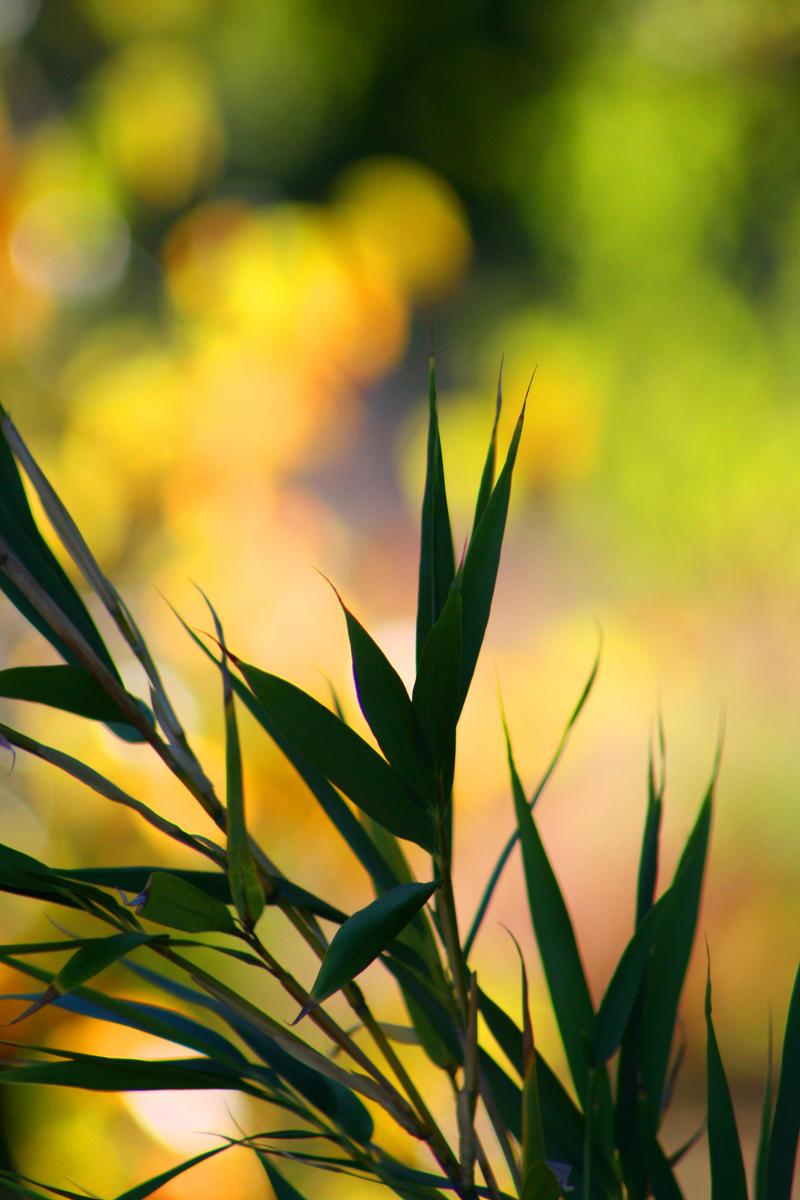 Bamboo Bokeh by SunOwl