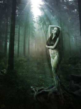 Tree Woman