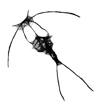 Experimental Drawing Copepod by gavenecko on DeviantArt