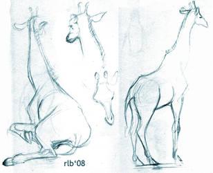 Zoo 08-08 : Giraffes by Kobb