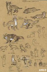 Three Kitties by Kobb