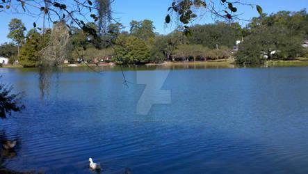 Lake Ella - 2 Oct 2011 - 2