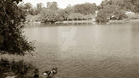 Lake Ella - 2 Oct 2011 - 3
