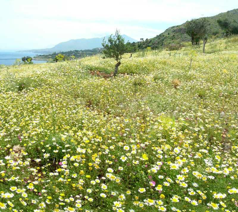 Flower field pano stock by LylicaGalatea