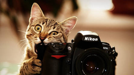 Cat as photographer