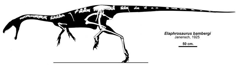 Elaphrosaurus by Qilong