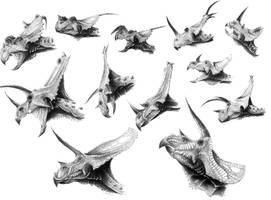 A Diversity of Ceratopsids by Qilong