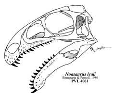 Noasaurid Speculation 2: Noasaurus leali by Qilong
