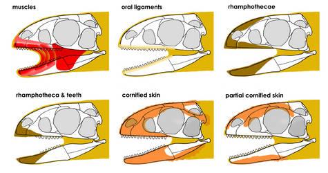 Different Arrangements of Facial Tissue by Qilong