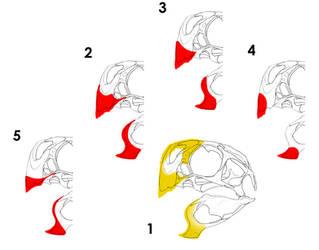 The Many Beaks of Eve-osaurus by Qilong
