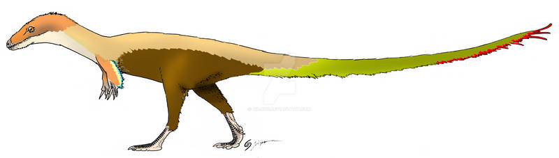 Traditional Sinosauropteryx