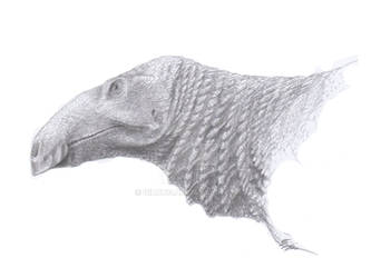 Edmontosaurus annectens and the Crest That Wasn't